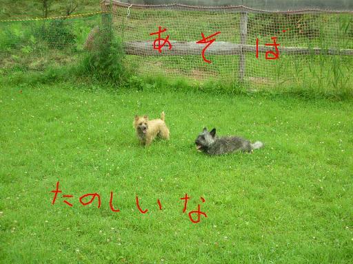 2007_051_1