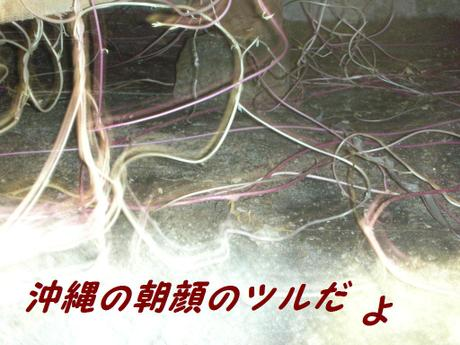 20086gatu_018
