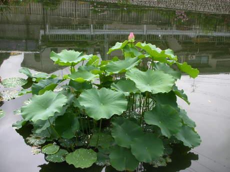20086gatu_003