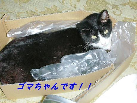 20086gatu_038