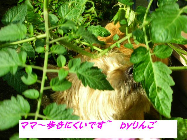2009611_010_2