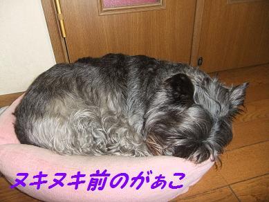 2010_031020103gatu0001